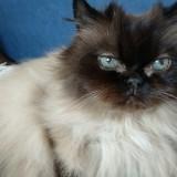 Privatzimmer als Arbeitsplatz gegen gelegentliches Home- und Katzensitting